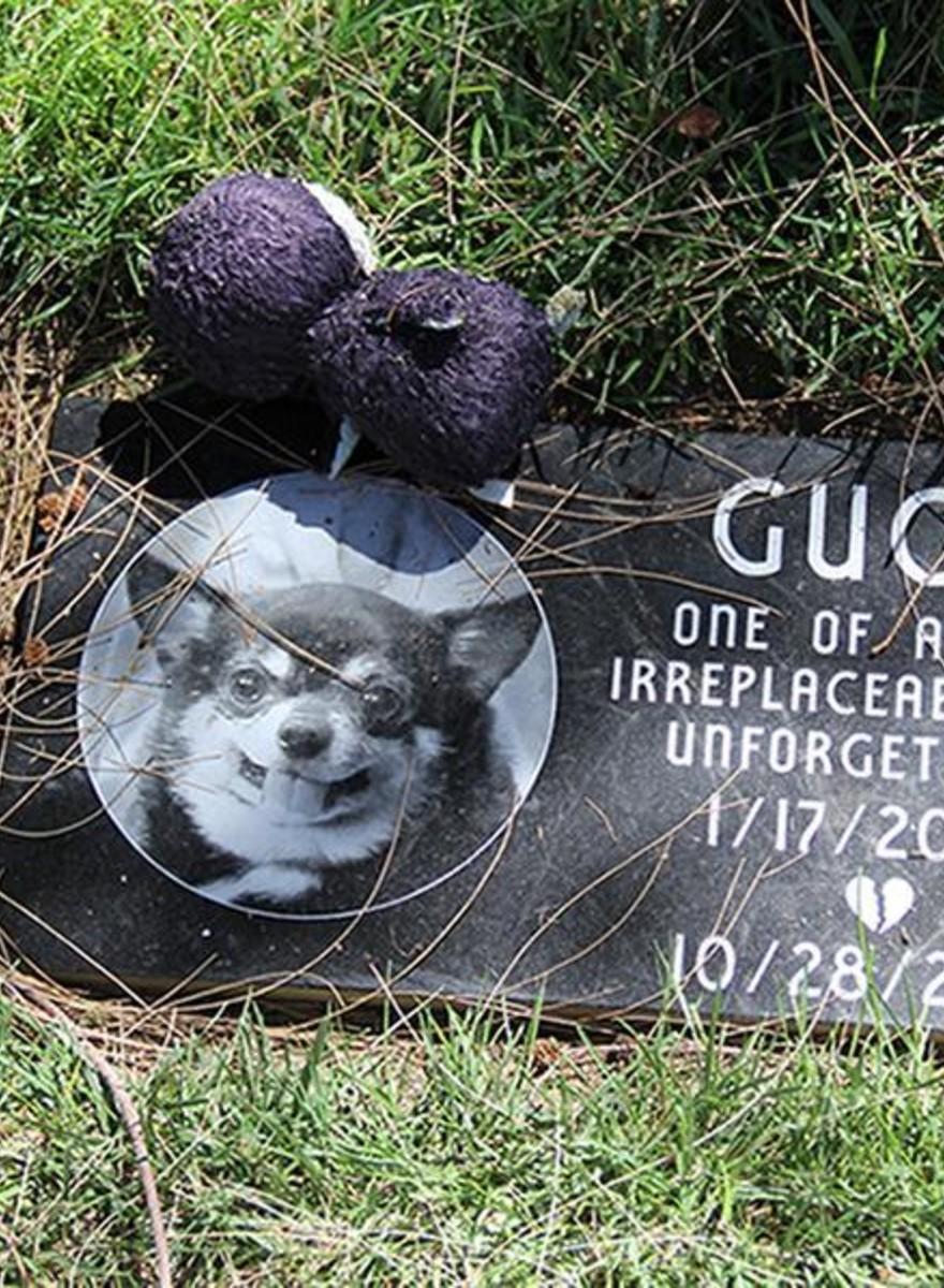Fotos de un cementerio de animales