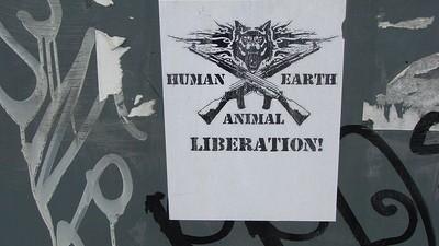 Un grupo ecologista radical libera a 3.000 faisanes en Salamanca