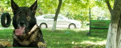 Câinii polițiști care găsesc cadavre și sperie ultrași se cresc cu iubire