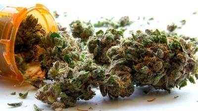 Facciamo il punto sulla cannabis terapeutica in Italia