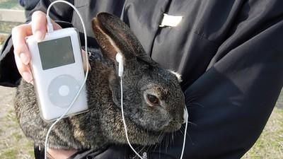 Unos tipos han creado un iPod para meter en tu vagina