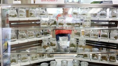 Cómo la marihuana legal perjudica al mercado negro y a los cárteles