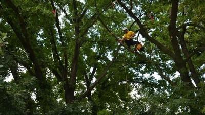 Fui a un campeonato de escalada de árboles