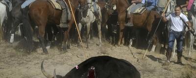Toro de la Vega: el Ayuntamiento de Tordesillas y la Junta de Castilla y León condenados