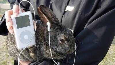 Uns tipos criaram um iPod para meter na vagina