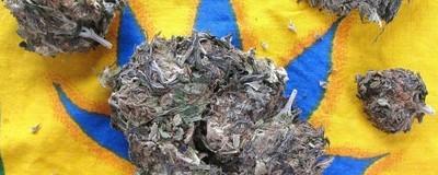 Fumătorii de marijuana ne-au explicat de ce preferă iarba proastă
