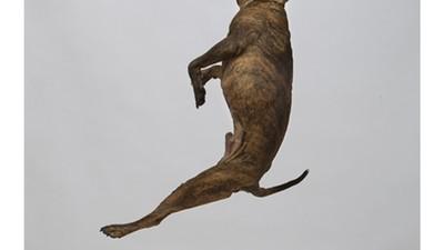 Hunde, die in die Luft gehen