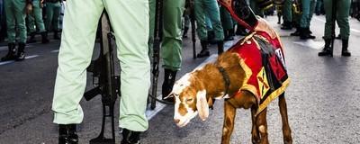 Familias, militares y la cabra de la legión: así fue el desfile del día de la Hispanidad