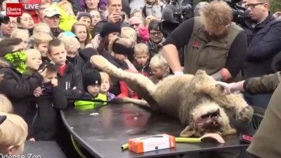 A Danish Zoo Publicly Dissected a Dead Lion, You Know, for Kids