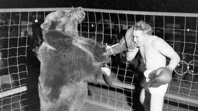La folle histoire des mecs qui combattaient des ours à mains nues