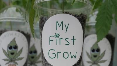 Hablamos con un tío que vende kits de cultivo de cannabis para niños