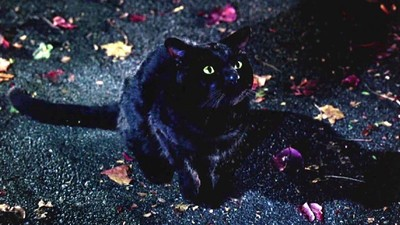 Your Local Shelter Probably Won't Let You Adopt a Black Cat Around Halloween