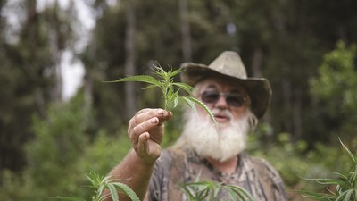 War in Weed Country