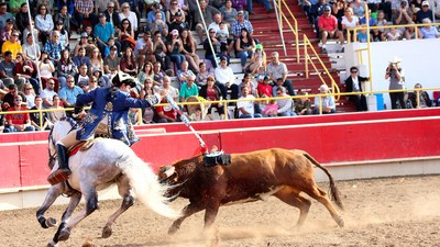 California Has the Most Peaceful Bullfights on Earth