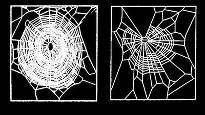 Ce au învățat cercetătorii după ce le-au dat droguri păianjenilor