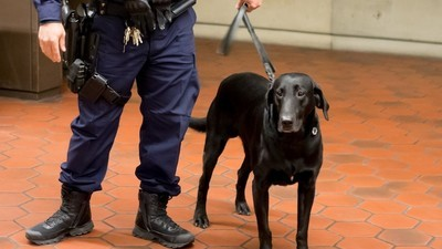 A Facebook Site Is Helping Australians Dodge Drug-Sniffing Dogs