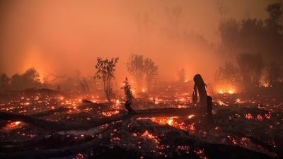 Proč by nás mělo zajímat vypalování pralesů v Indonésii, když žijeme 16000 km daleko