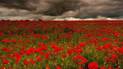 Britain's Poppy Wars: The Battle for the Meaning of Remembrance Day in the UK