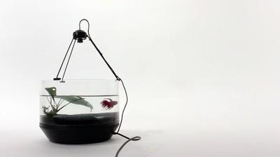 Dieses mobile Aquarium bewegt sich in Schwimmrichtung des Fisches