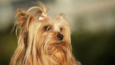 Wie eine Hundegang Dortmund terrorisiert