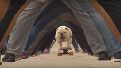 Otto The Skateboarding Bulldog Sets World Record