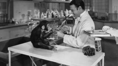 Die USA schicken ihre letzten 50 Labor-Schimpansen in den Ruhestand