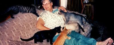Wie viele Katzen sind zu viele Katzen? Ein deutsches Amtsgericht weiß die Antwort