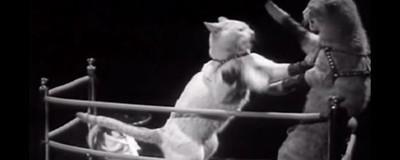Cum au ajuns pisicile mascota internetului, în zece clipuri de Youtube