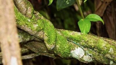 La scienza ha finalmente confermato il potere curativo dell'ayahuasca