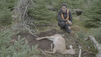 The Hunt for Shale Gas on Quebec's Deer-Infested Island, Anticosti