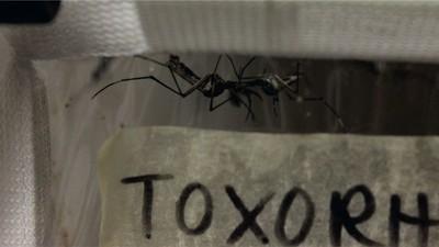 Londons unterirdisches Mückenlabor