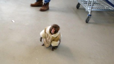 Three Years After His Brush with Fame, the IKEA Monkey Is Doing Great
