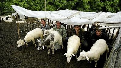 Am vorbit c-un cioban român ca să aflu ce crede de faptul că parlamentarii vor să-i ia câinii