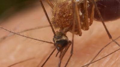 México es el primer país en dar luz verde a la vacuna contra el dengue