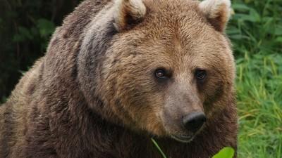 Mi padre decidió perderse en medio del monte y acabó devorado por un oso