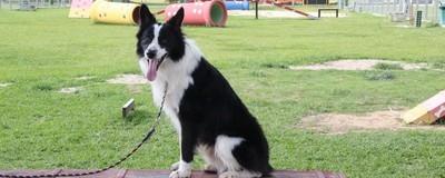 A Maior Cachorrada do Brasil