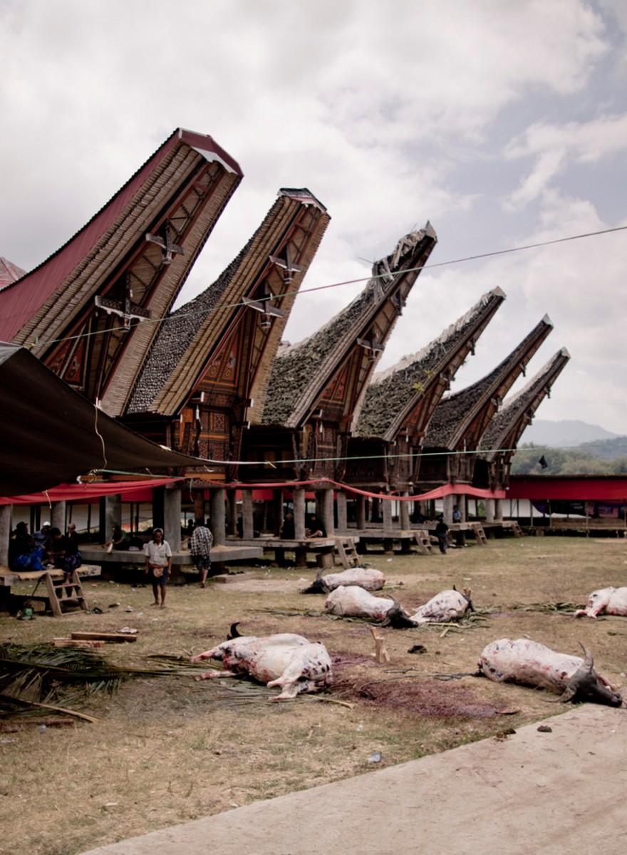 Voor de Toraja is de dood nog lang niet het einde