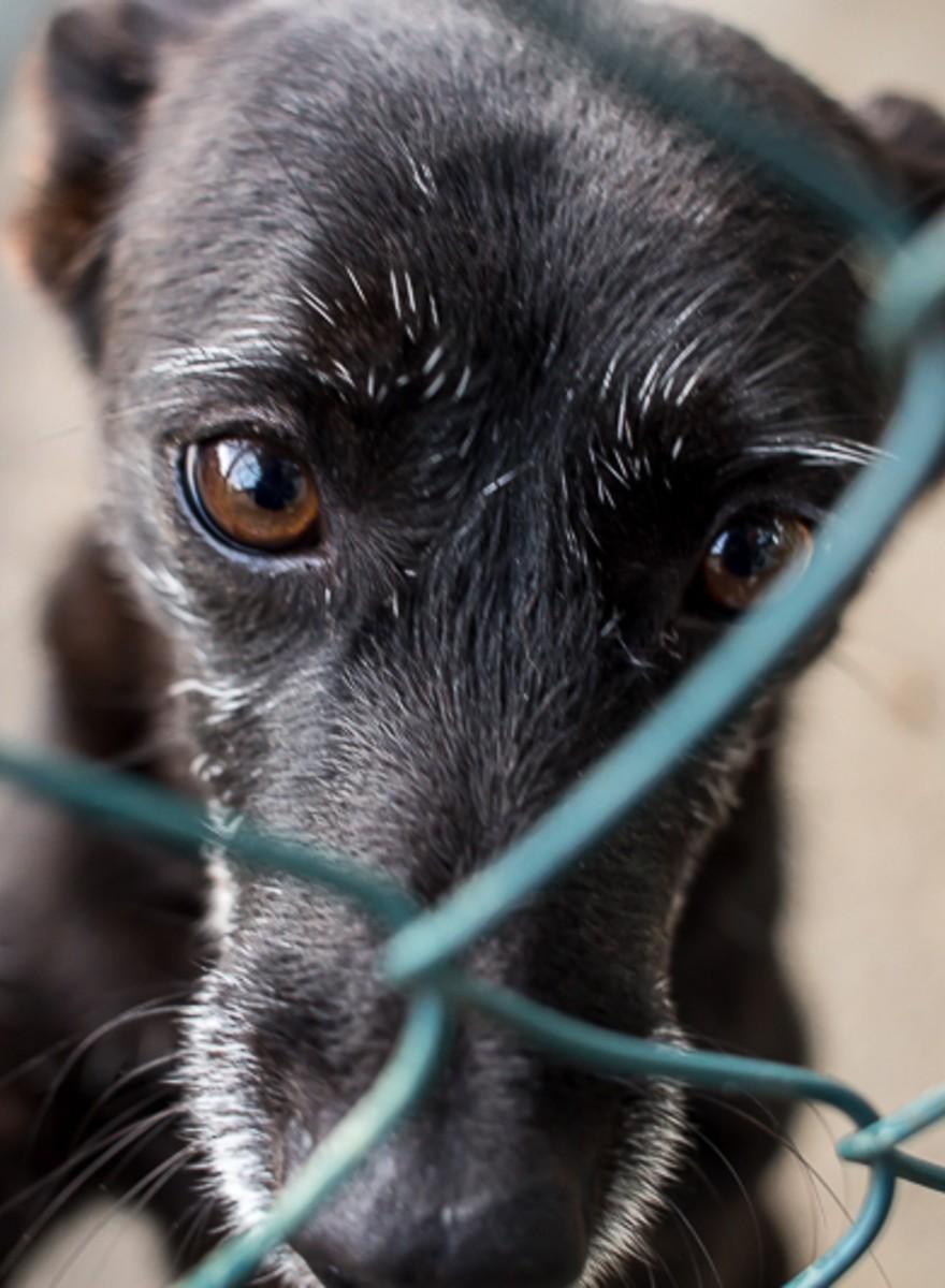 Jesus, um cão entre os milhares que habitam os abrigos e canis portugueses