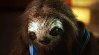 YouTube Loves This Sloth From an Australian Anti-Drug Campaign