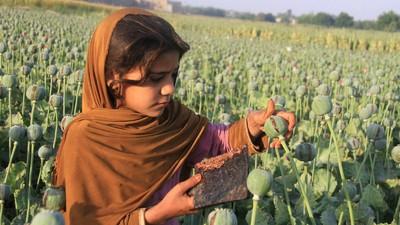 ¿Por qué la producción de opio afgana está cayendo en picado? Te explicamos las claves