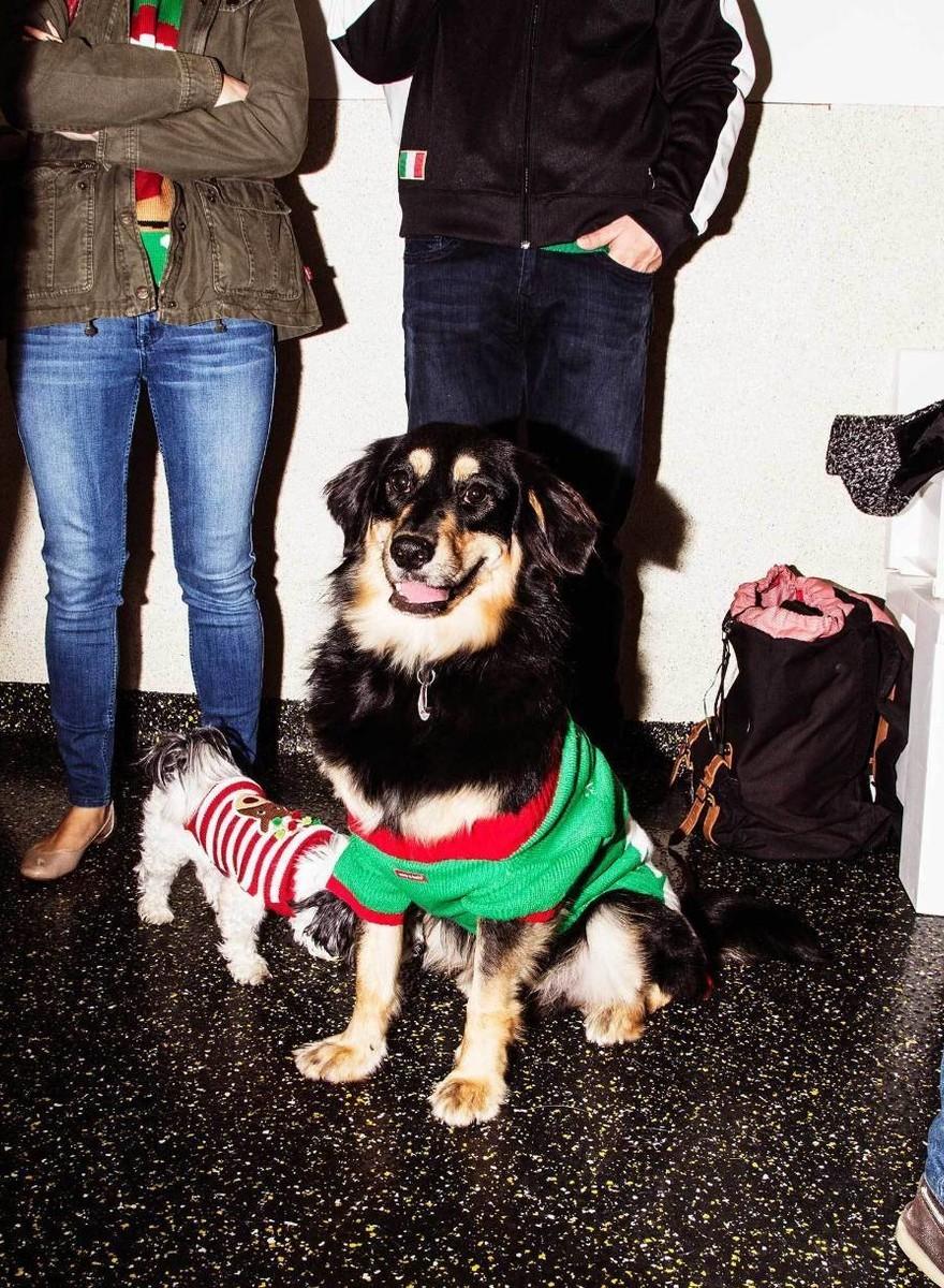 Cani con maglioni brutti a una festa di Natale