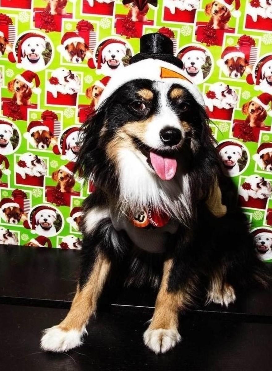 Fotos de los peores jerséis navideños para perro
