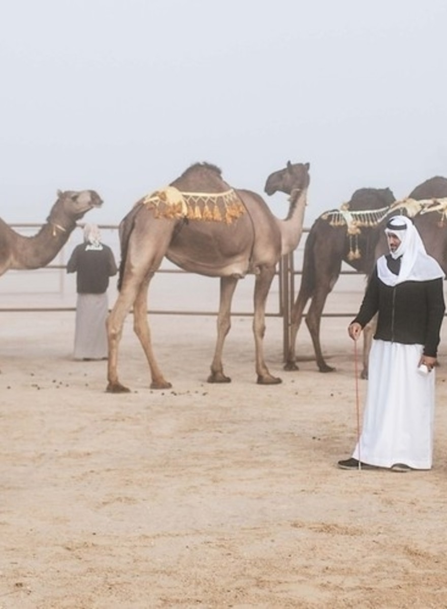 Fotografie da un concorso di bellezza per cammelli