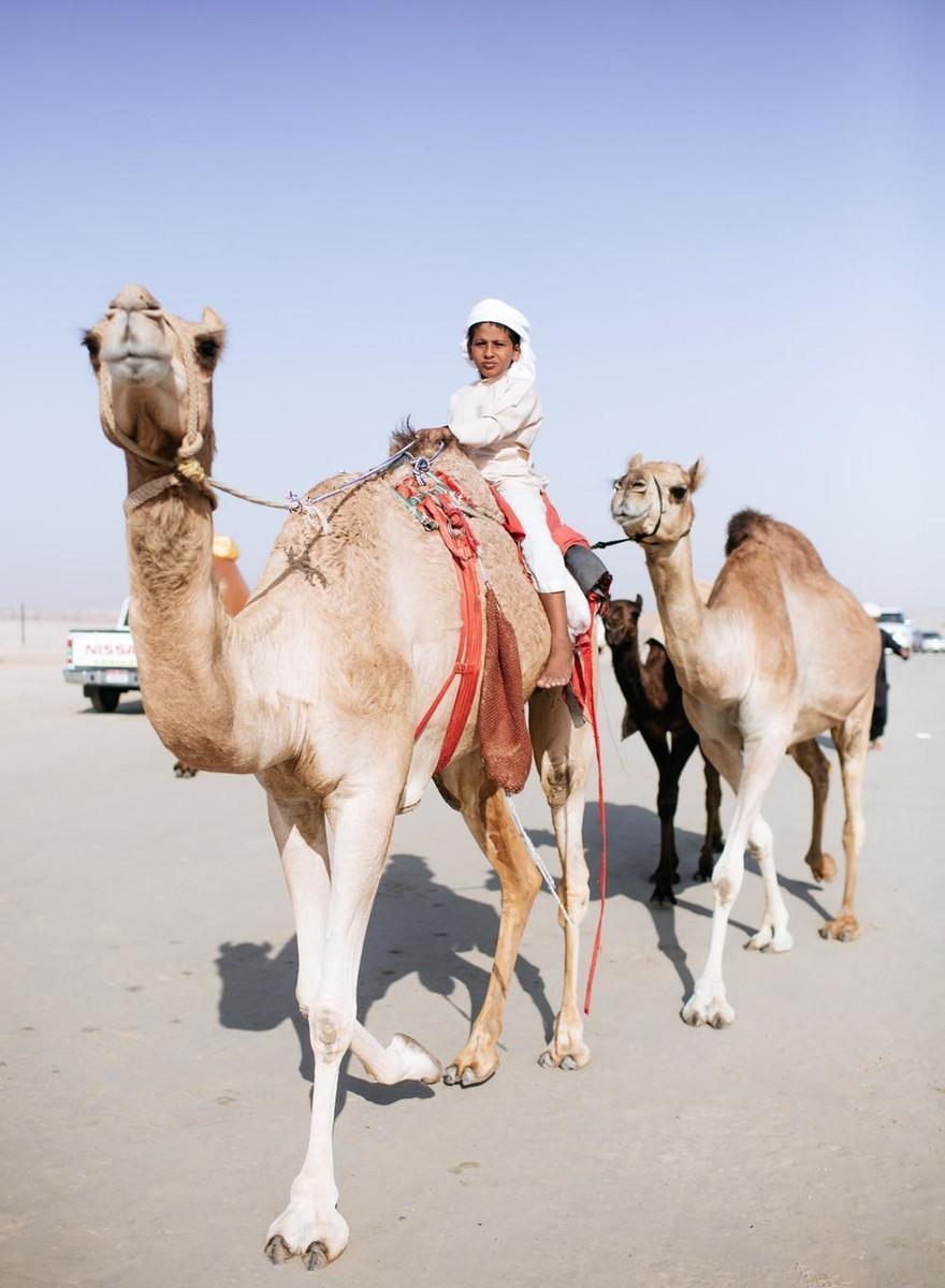 Foto's van een schoonheidswedstrijd voor kamelen in de Verenigde Arabische Emiraten