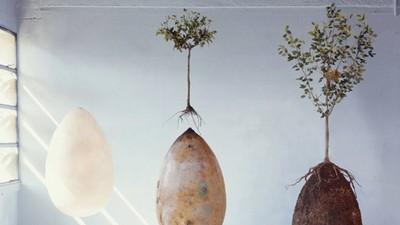 Estes ovos orgânicos transformam o teu cadáver putrefacto numa árvore