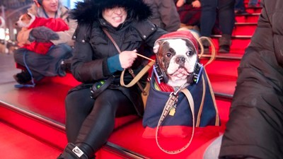 Laurie Anderson's Concert for Dogs Was Packed with Freezing People and Their Freezing Dogs
