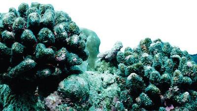 Wie du mit deiner Sonnencreme das Great Barrier Reef zerstörst