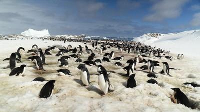 De stijgende zeespiegel en smeltende ijskappen