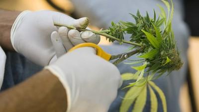 Cómo Nueva York echó a perder totalmente la legalización de la marihuana medicinal