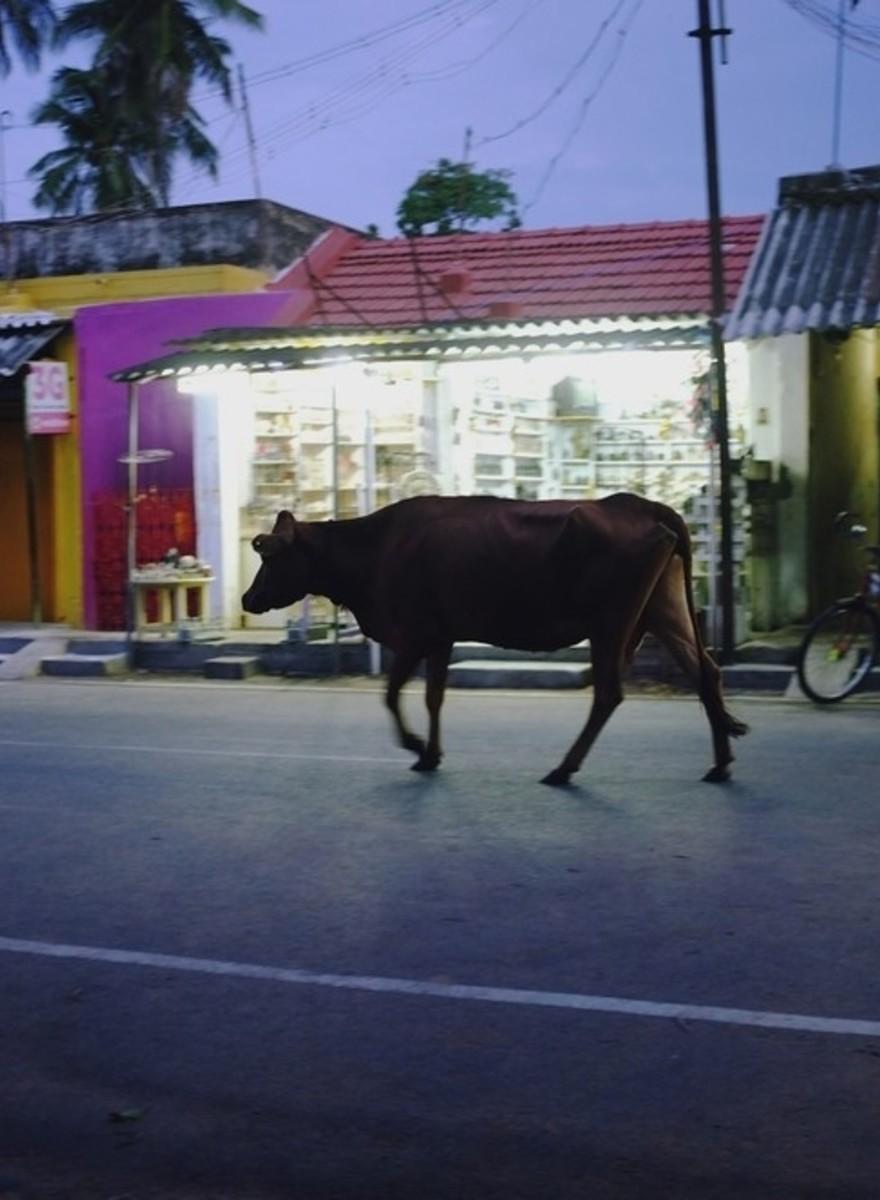 Die Suche nach Einsamkeit in Südindien